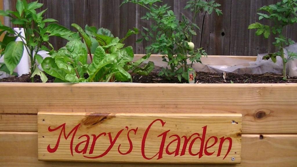 Mary's Garden Box 2