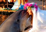 DOPHIN WEDDING